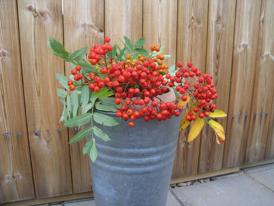 Rowan Berries, Pot, Wall, Stones, Colors, Leaf