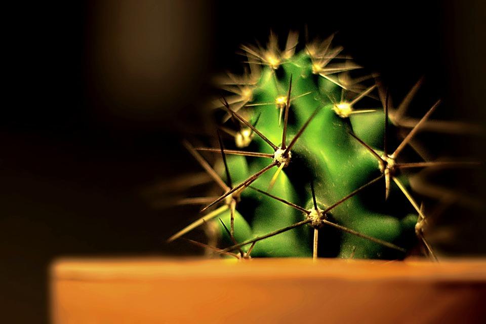 Cactus, Plant, Pot, Desert, Prickly
