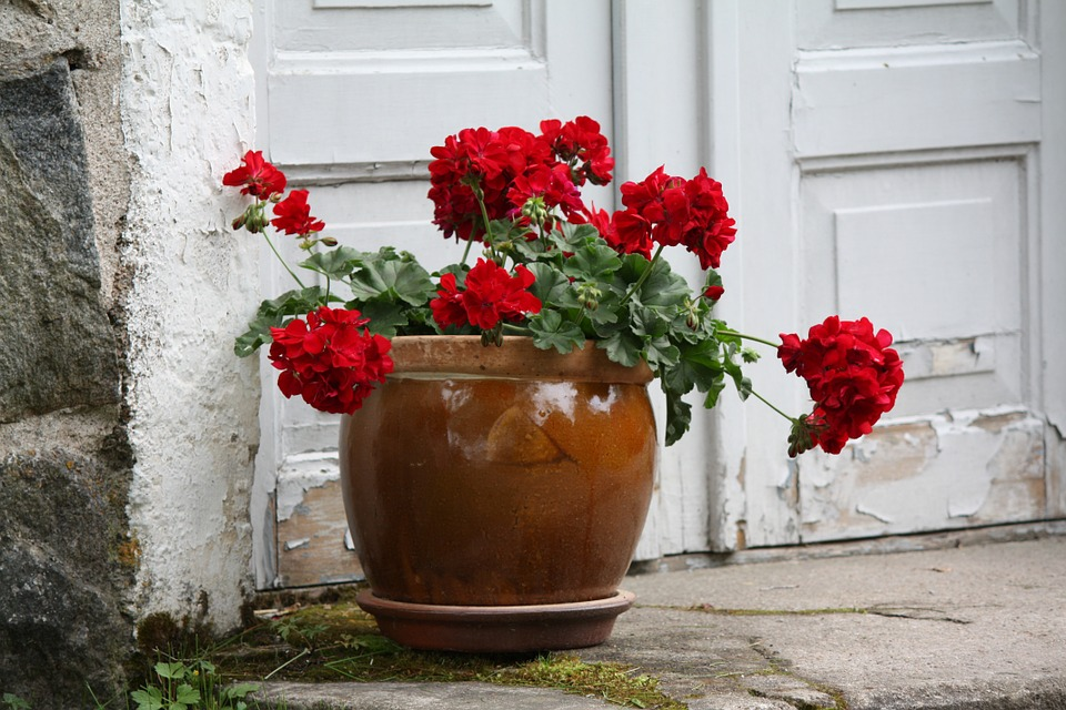 Flower, Geranium, Pot, Red, Door, Staircase, Floral