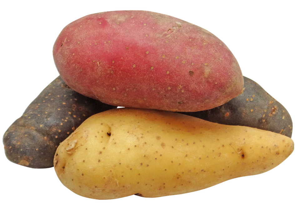 Potato, Fingerling, Rainbow, Potatoes, Png