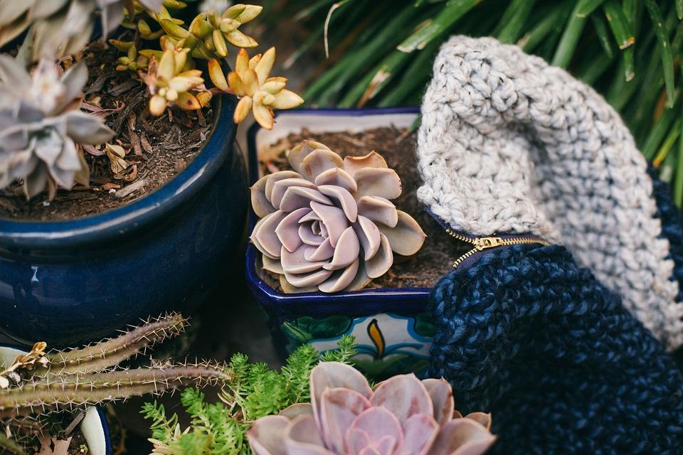 Plants, Pots, Gardening, Nature