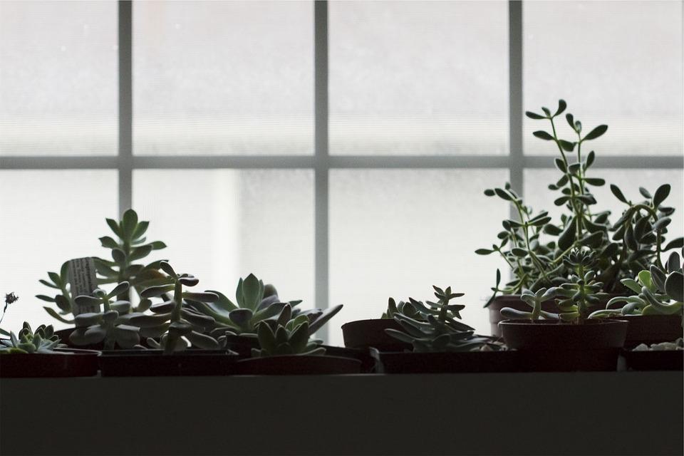 Pots, Plants, Window, Indoor, Potted Plants