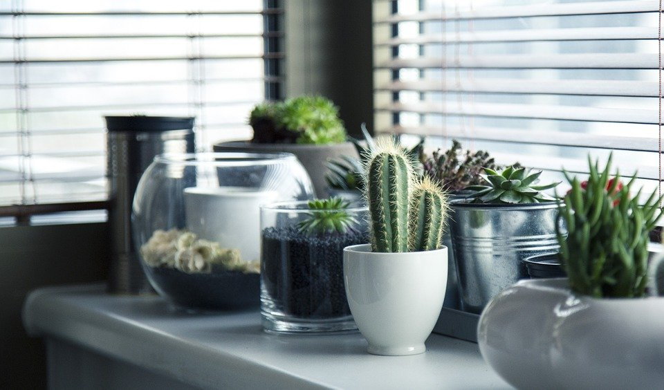 Pots, Plants, Cactus, Succulent, Shelf, Window, Garden