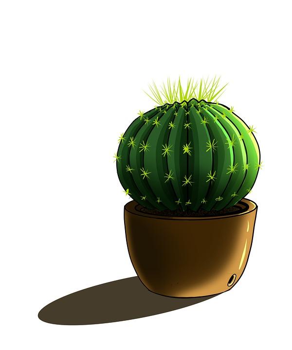 Cactus, Plant, Potted Plant, Nature, Indoorplants