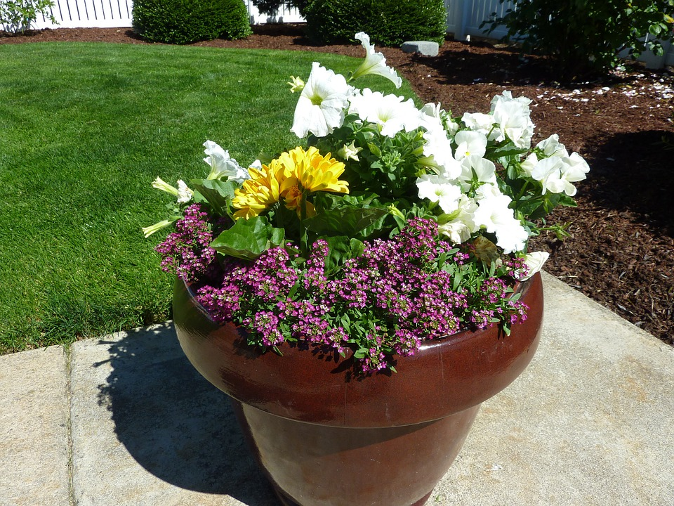 Potted Plant, Plants, Flowerpot, Growing, Growth, Patio
