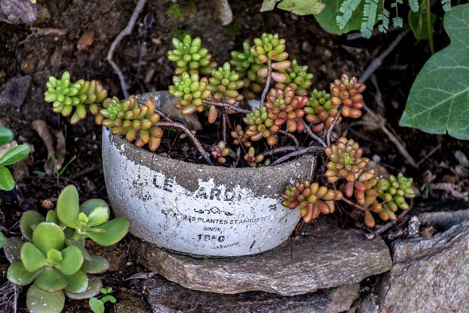 Plant, Garden Decor, Potted Plant, Greenery, Stone