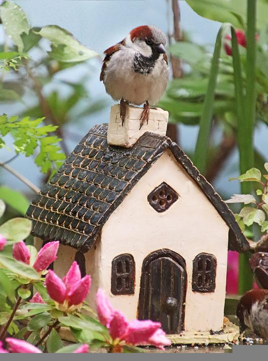 Bird, Sparrow, Wildlife, Perched, Pottery, House