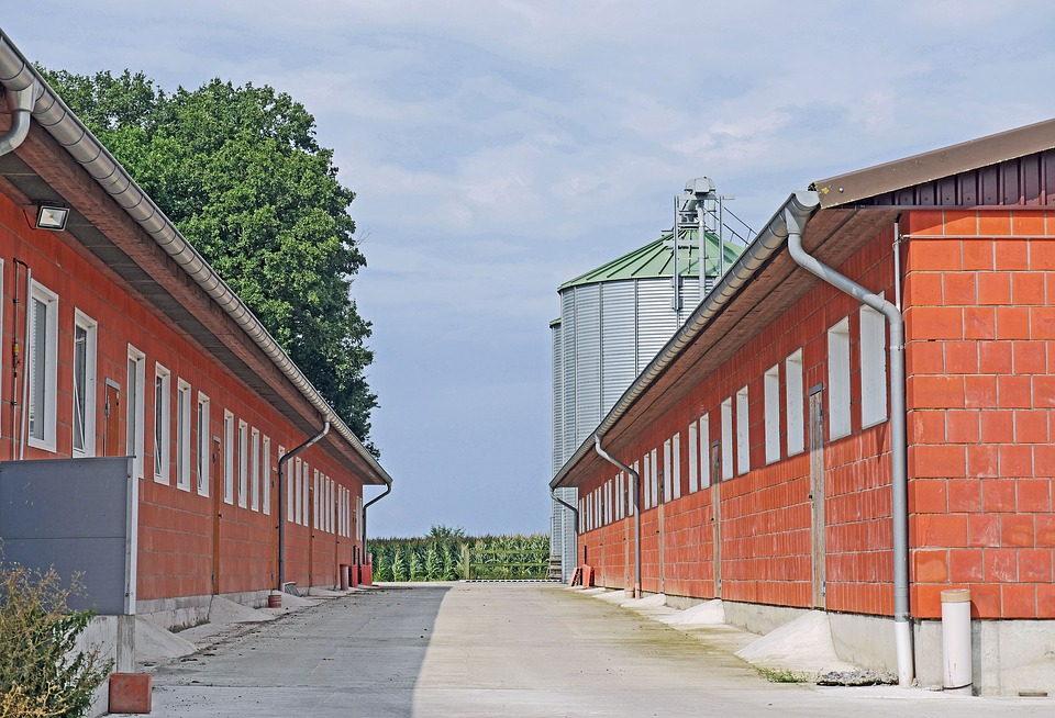 Agriculture Today, Poultry, Large Stables, Feed Silo