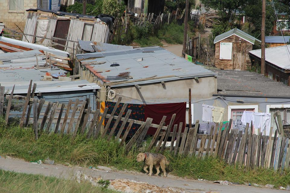 Township, Knysna, South Africa, Dog, Poverty, Boards