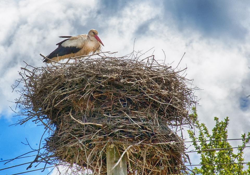 Stork, Stork Nest, Power Lines, Power Pole