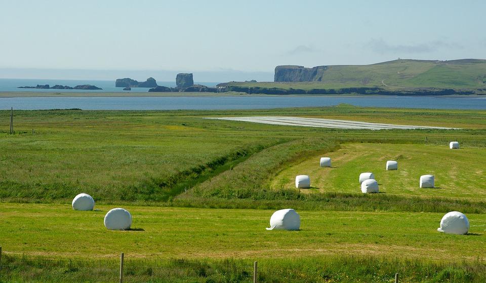 Iceland, Cliffs, Vik, Prairie
