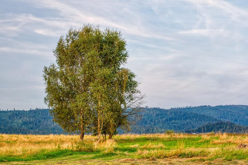 Tree, Fields, Grass, Meadow, Grassland, Prairie, Nature