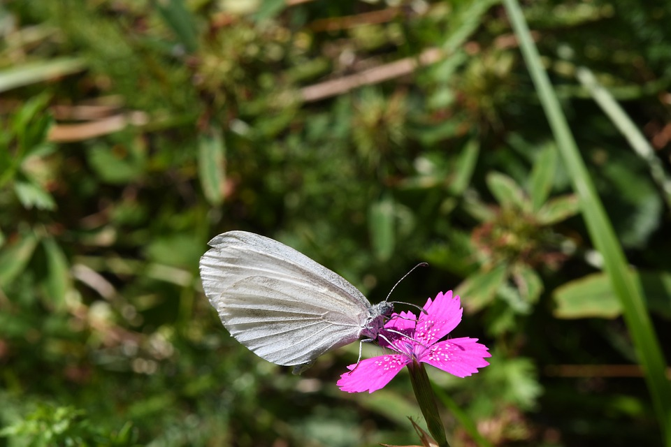Butterfly, Ali, Fly, Insect, Prato, Summer
