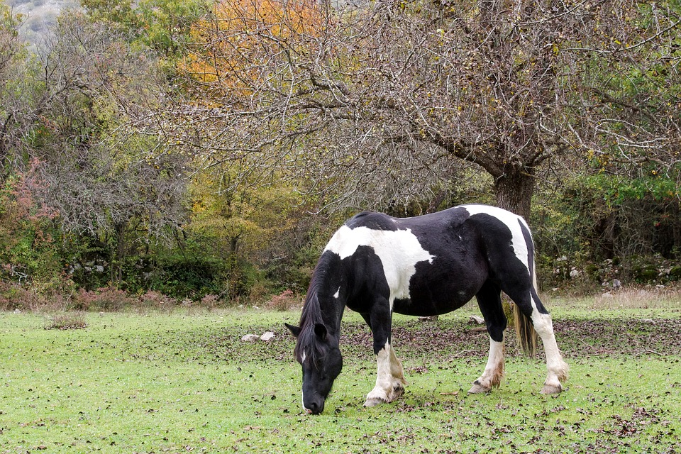 Horse, National Park Of Abruzzo, Pasture, Prato, Animal