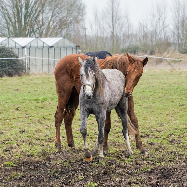 Foal, Horse, Pre, Grass