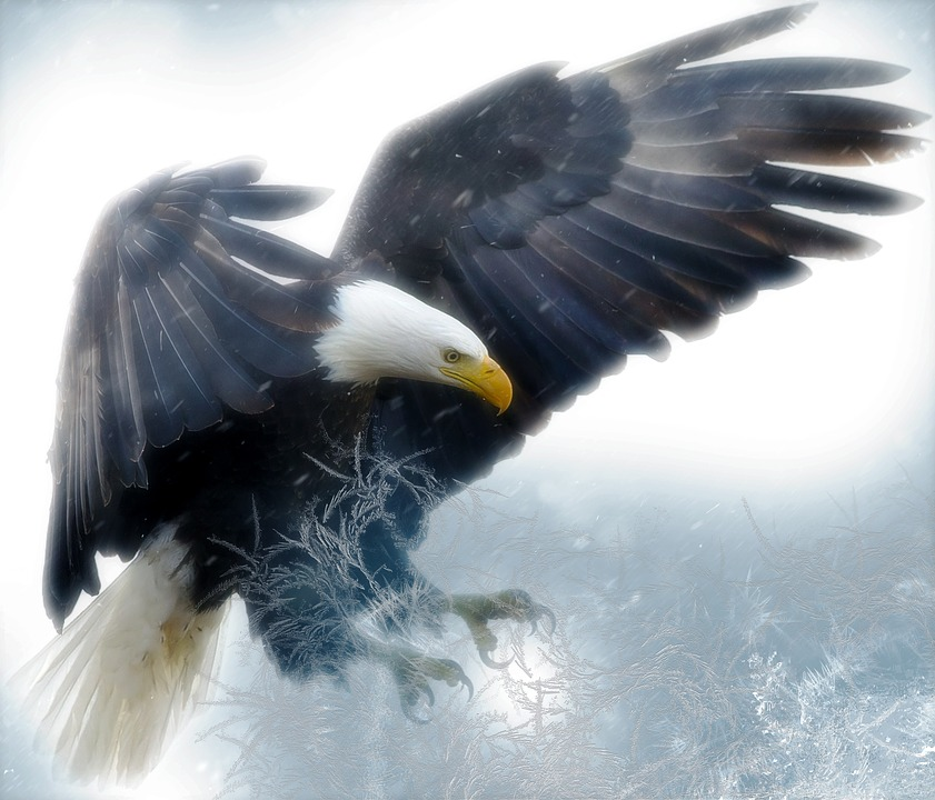 Bold eagle: Bird of prey swoops to swipe cranes&#39- food but gets ...