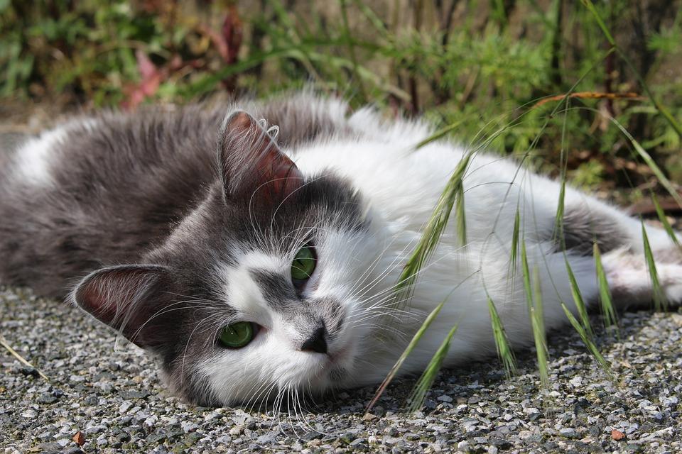 Cat, Nature, Predator, Female, Animal, Domestic