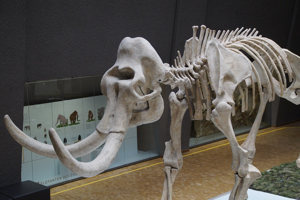 Museum, Mammoth, Skeleton, Prehistoric Times, Mammals