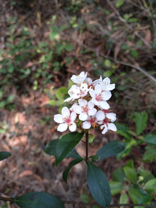 Flower, Leaf, Petal, Pretty