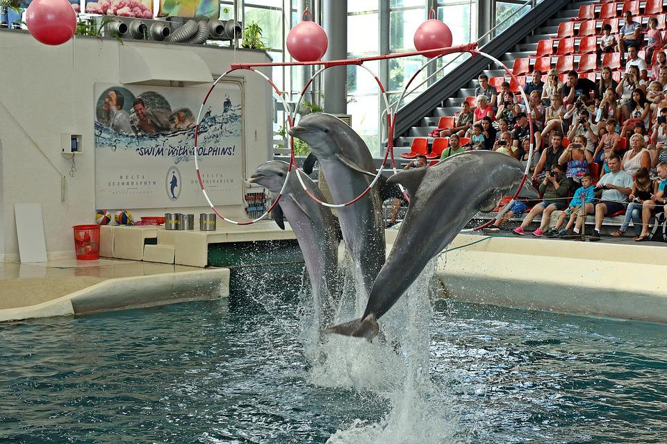 Dolphins, Varna, Bulgaria, Preview, Jumping, Aquarium