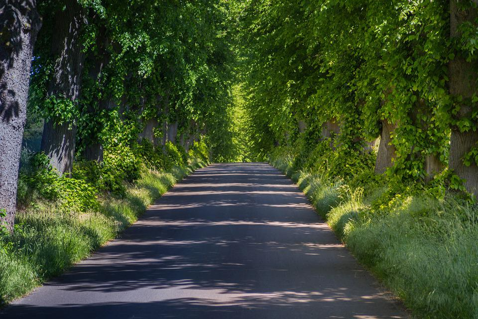 Trees, Tree Lined Avenue, Price 2012, Beautiful