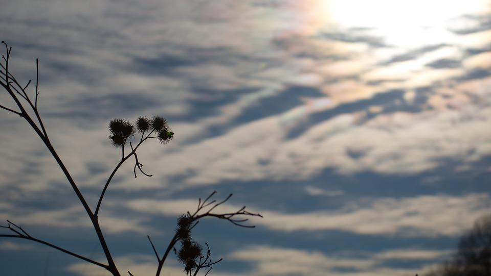 Thistle, Sky, Nature, Plant, Flower, Prickly, Blue