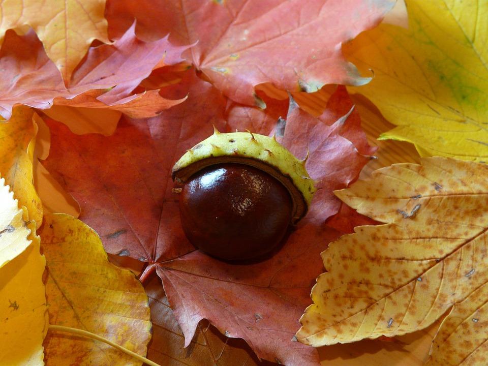 Chestnut, Chestnut Shell, Shell, Sleeve, Prickly, Brown