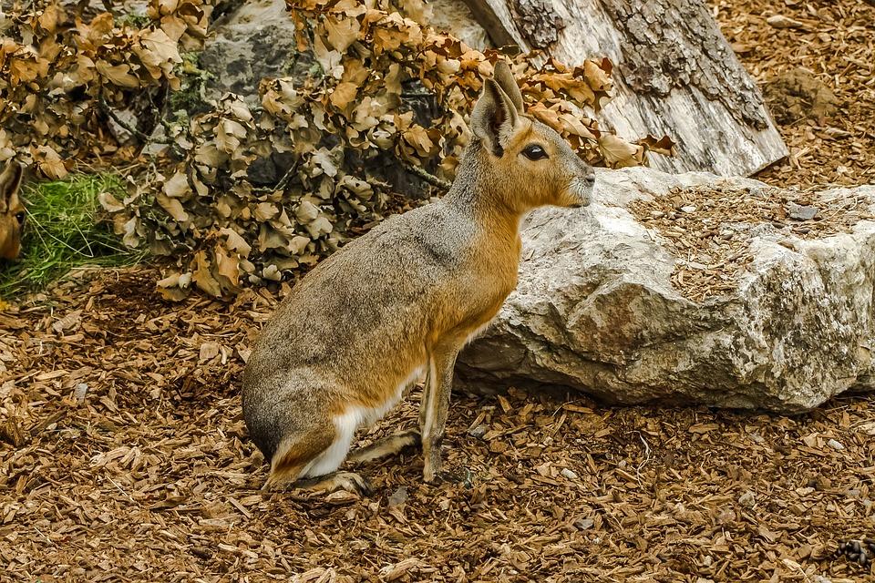Animal, Mara, Priroda