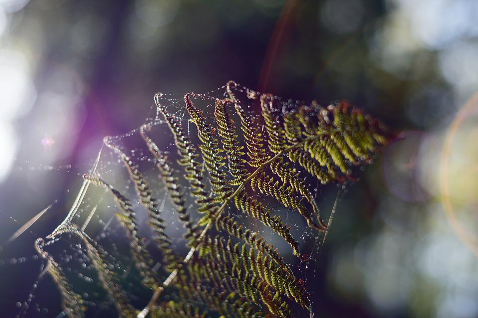 Web, Fern, Spectrum, Prism, Nature, Green, Leaf, Silk
