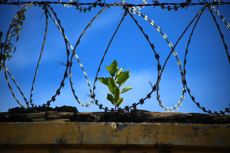 Freedom, Prison, Jail, Jailed, Prison Break, Wire