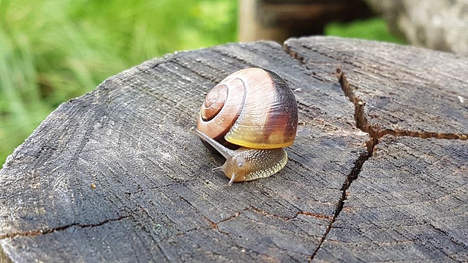 Snail, Animal, Nature, Shell, Garden, Probe, Crawl