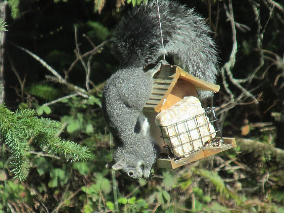 Squirrel, Ingenious, Problem Solving, Nature, Hungry