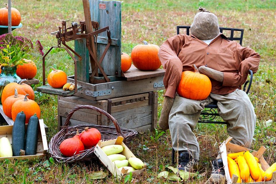Pumpkins, Vegetables, Gourds, Harvest, Produce, Organic