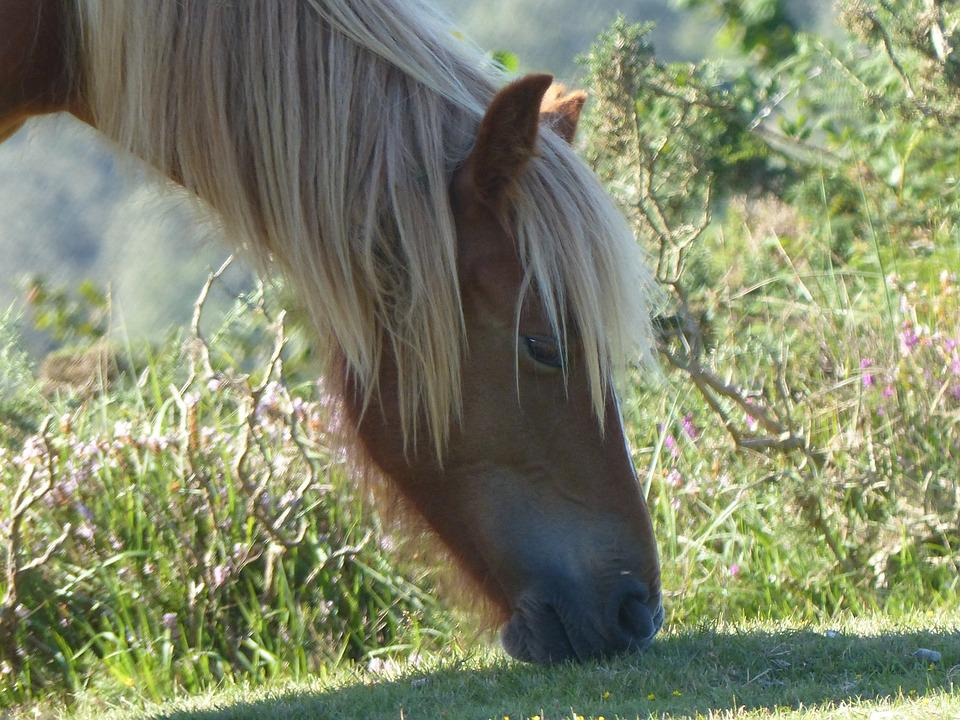 Horse, Head, Horse Head, Mane, Horses, Profile, Animal