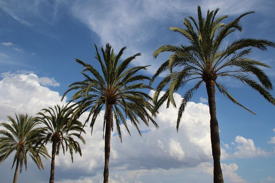 Palm, Sky, Clouds, Beach, Mallorca, Promenade, Sea