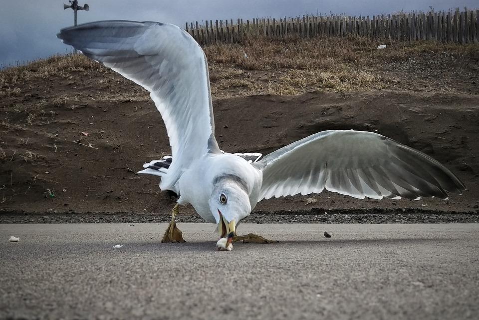 Beach, Promenade, Seagull, Seabird, Wild Birds