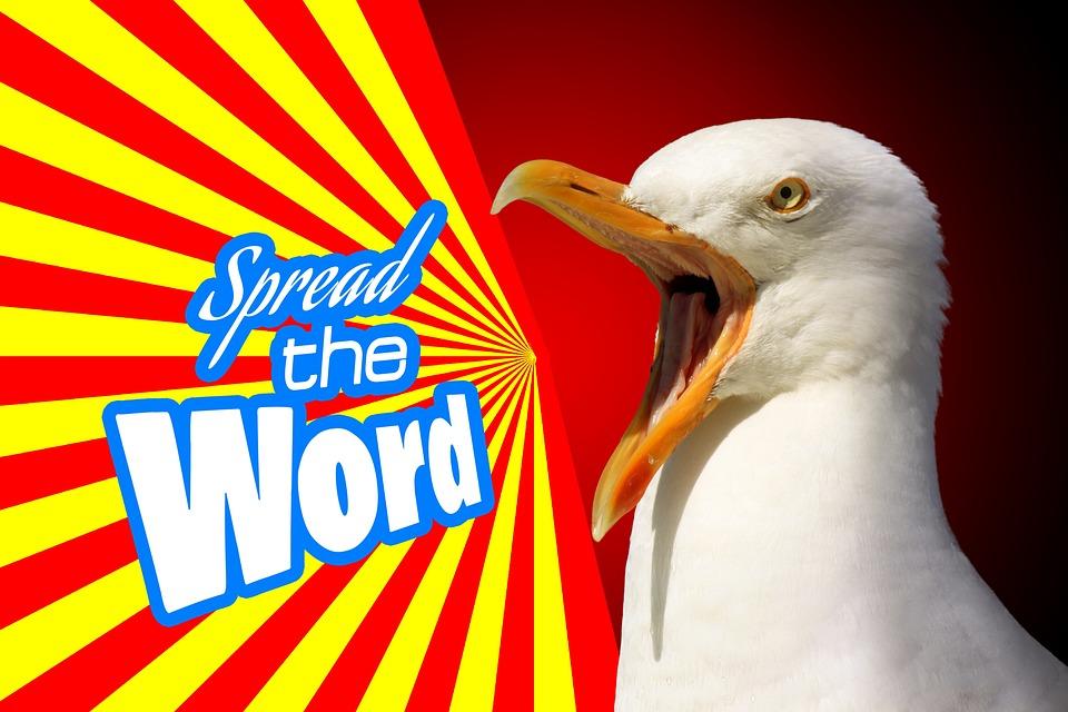 Marketing, Advertising, Propaganda, Notice, Seagull