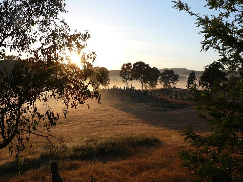 Morning, Sunrise, Sun, Country, Bush, Farm, Property