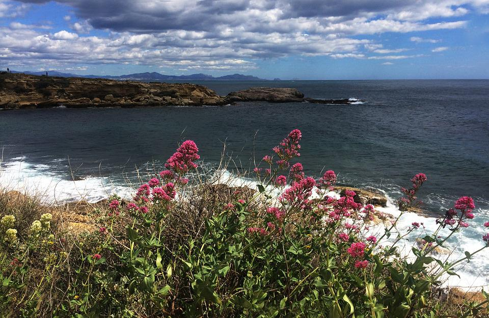 Flowers, Sea, Provence, Coast, Cote Bleue, Water