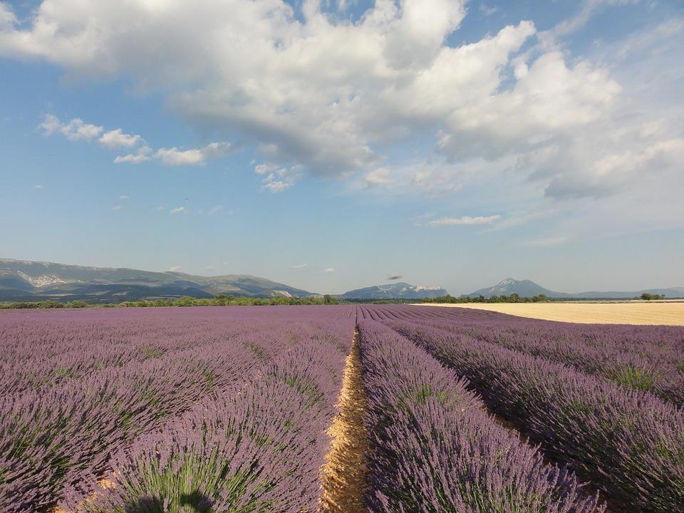 Provence, Lavender, Summer, Flowers, Purple, Nature