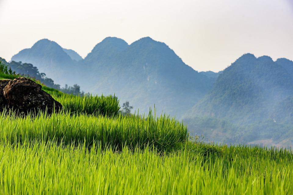 Pu Luong Nature Reserve, Thanhhoa Province, Agriculture