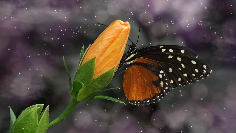Butterfly, Nature, Insect, Public Record, Blossom
