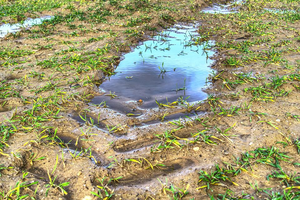 Puddle, Mud, Water, Water Puddle, Mirroring, Reflection