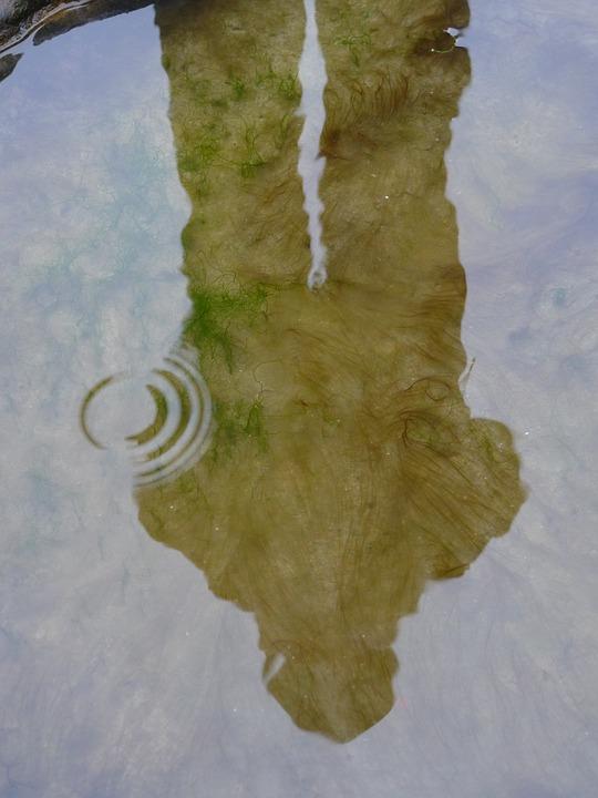 Shadow, Sleep, Non, Puddle, Pond, Lake
