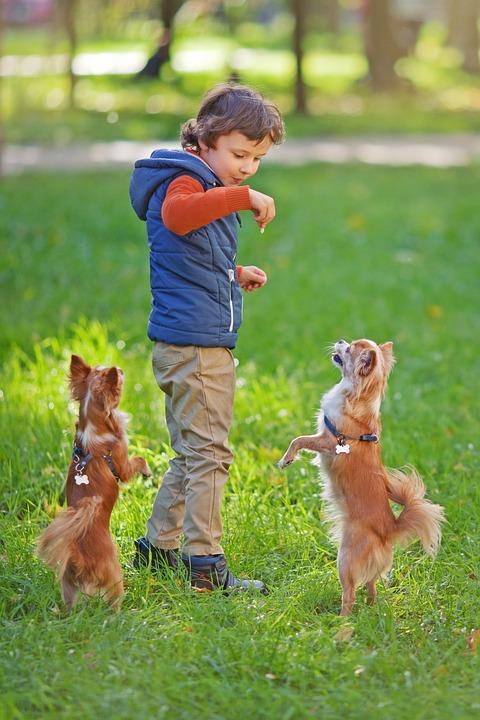 Dogs, Dog, Pet, Pug, Pets, Man's Best Friend, Devotion