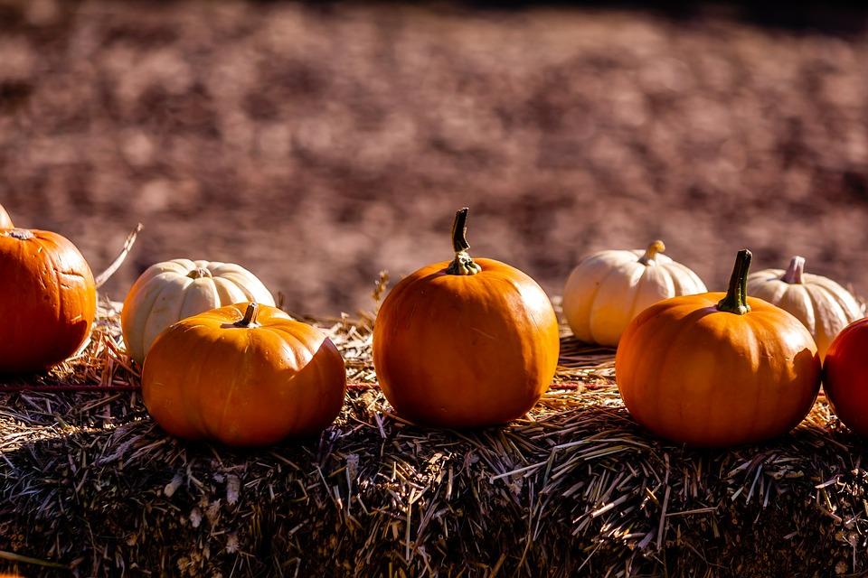 Pumkin, Autumn, Sun, Food, Outdoor, Scenery, Plant