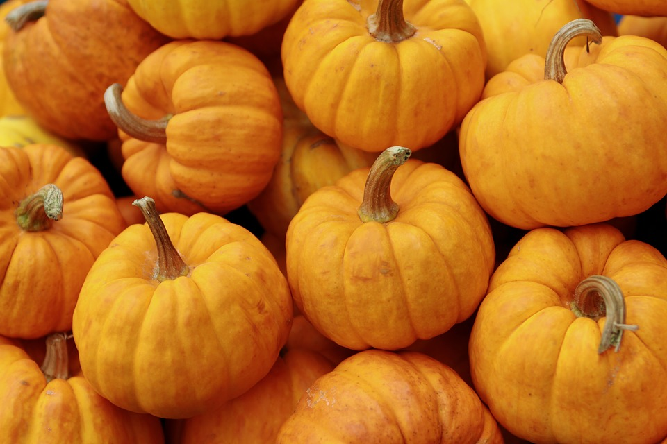 Pumpkin, Orange, Halloween, Autumn, Fall, Food