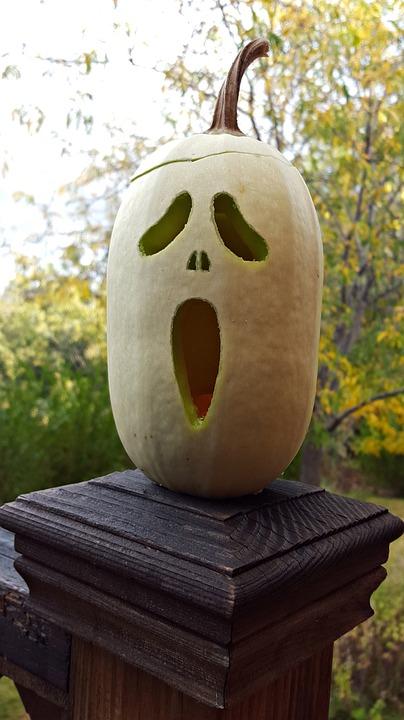 Squash, Garden, Gardening, Pumpkin, Halloween