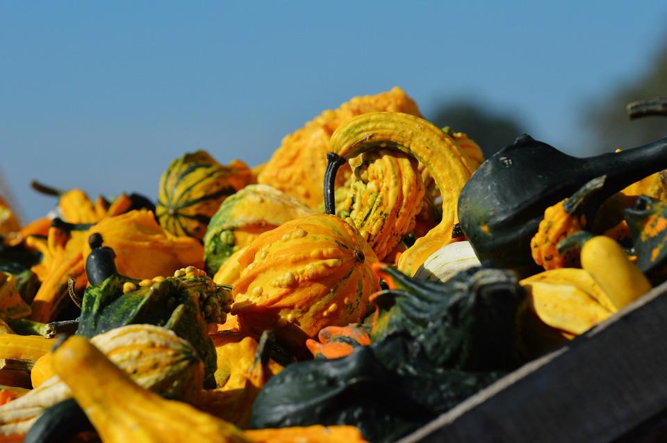 Pumpkin, Autumn, October, Halloween, Gourd, Pumpkins