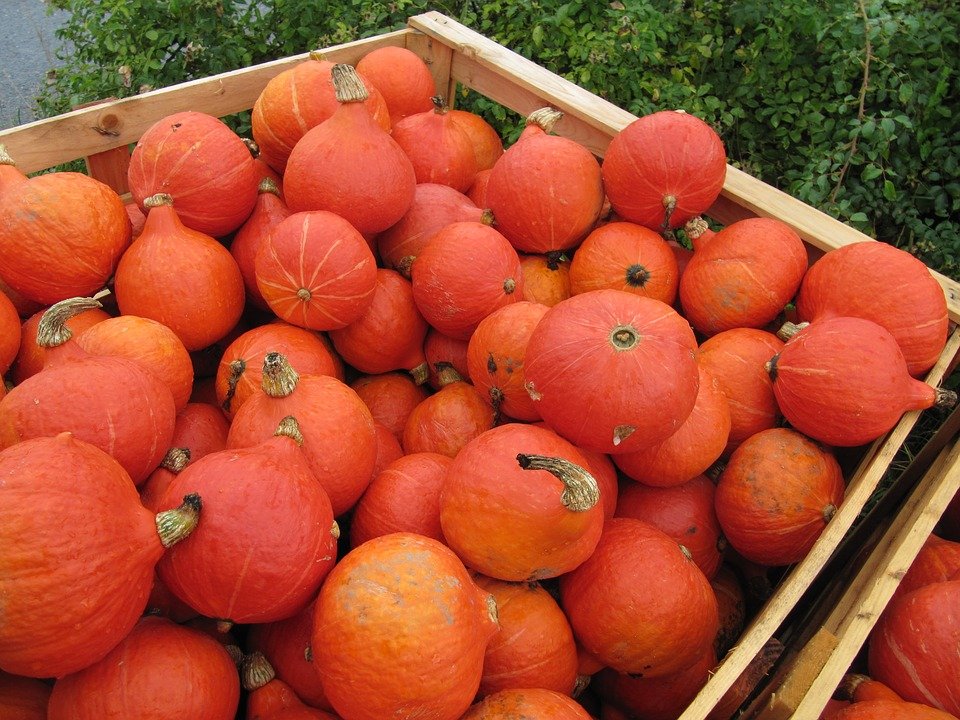 Hokkaido, Pumpkin, Orange, Red, Thanksgiving, Harvest